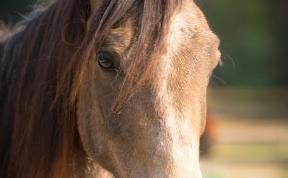 Pferdefotografie - Portraits